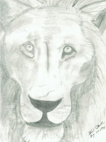 Lion 2 by Tori Washburn