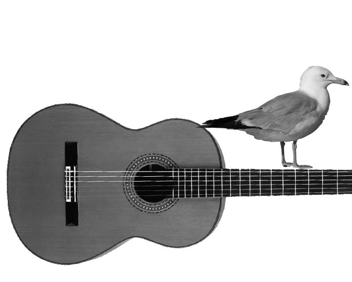 EDITORIAL%3A++JONI+MITCHELL+--+SONG+TO+A+SEAGULL